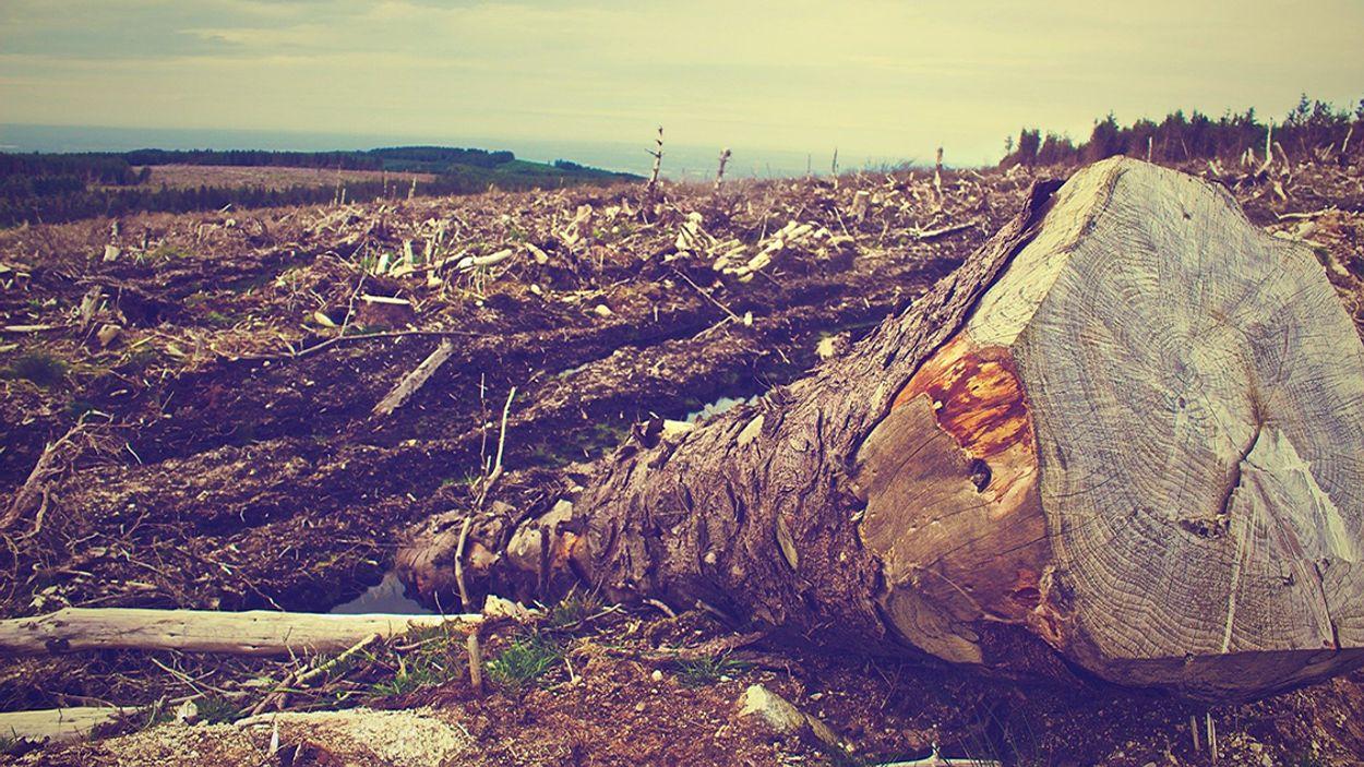 Afbeelding van Oxfam: Multinationals maken beloften klimaat en gelijkheid niet waar