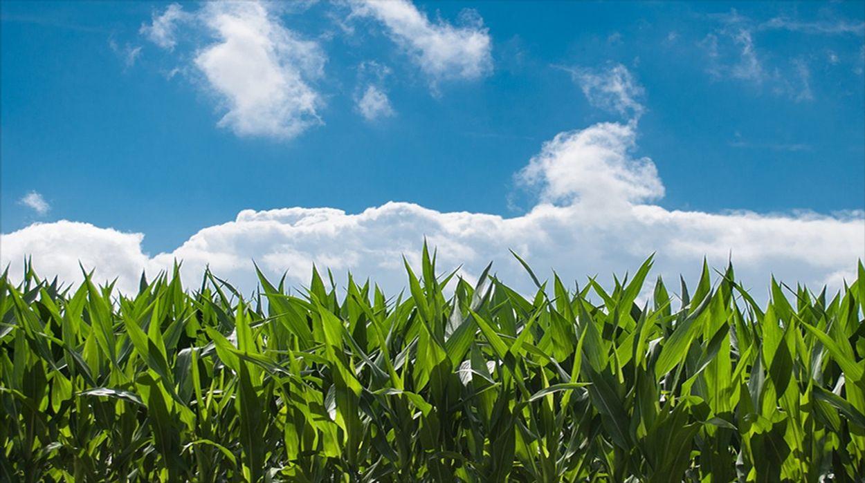 Afbeelding van Productie landbouw krimpt met 3 procent door coronacrisis