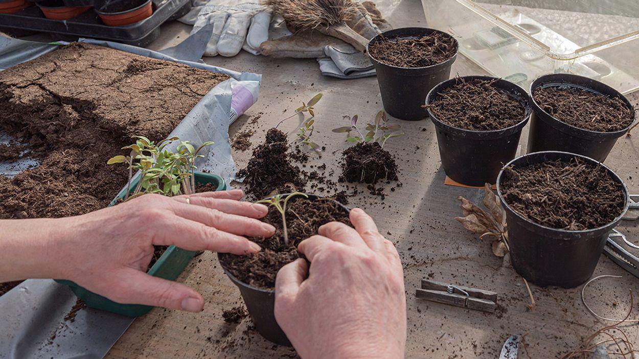 Afbeelding van Waarom potgrond zonder turf beter is voor het klimaat