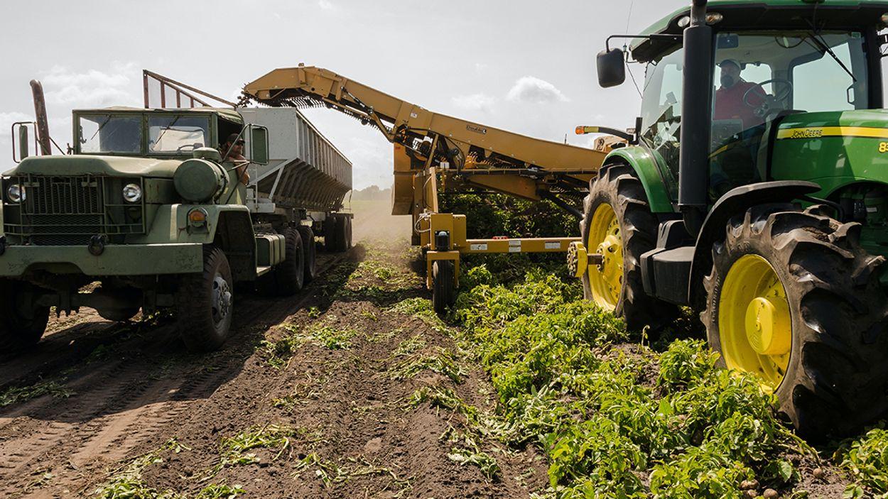 Afbeelding van Timmermans vraagt banken: 'Stop met financieren intensieve landbouw'