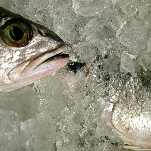 Afbeelding van Welke vis is nog duurzaam?