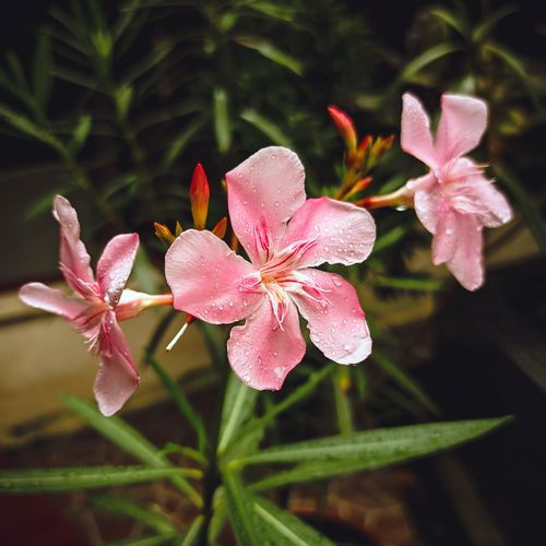 Afbeelding van Zaterdag in Kassa: Wordt er voldoende gewaarschuwd voor giftige planten?