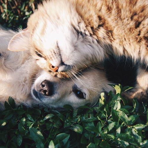 Afbeelding van Bestrijdingsmiddelen ongedierte honden en katten schadelijk voor mens