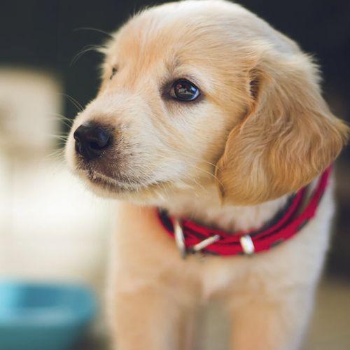 Afbeelding van Dierenbescherming komt met 'Dier en Mens Wijzer' voor huisdierkeuze