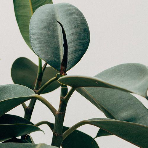 Afbeelding van Plant voorziet je huis van een plaag: wat kun je hiertegen doen?